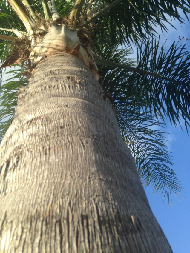 palm tree perspective